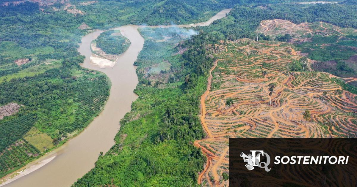 Europa secondo più grande importatore al mondo di prodotti derivati da deforestazione tropicale. E l'Italia è ai primi posti in Ue
