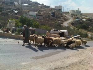 Un pastore del poverissimo villaggio di Al Tuwani, estremo sud della West Bank, Palestina