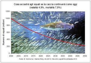 Mortalità squali