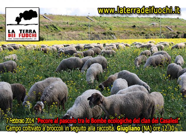 Terradeifuochi-Ferrillo