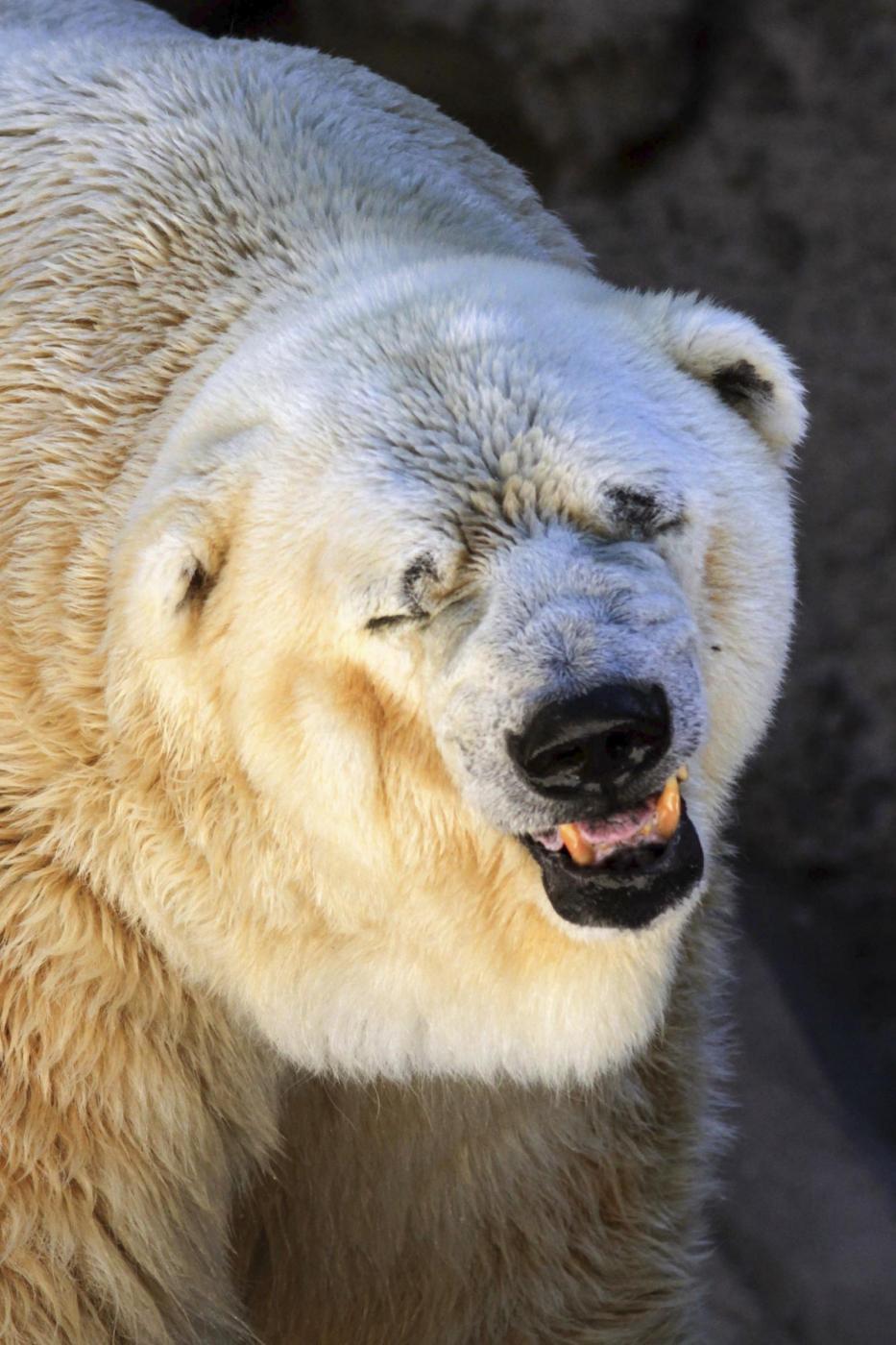 Animali maltrattati l orso arturo condannato a morte il fatto
