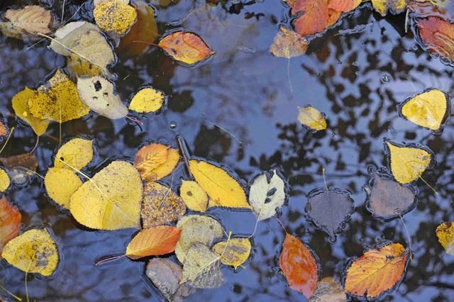 autunno parco dell'amolgora (mi) - Foto di Vittorio Giannella