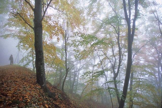 atmosfera magica nella faggeta monte nevegal - foto di Vittorio Giannella