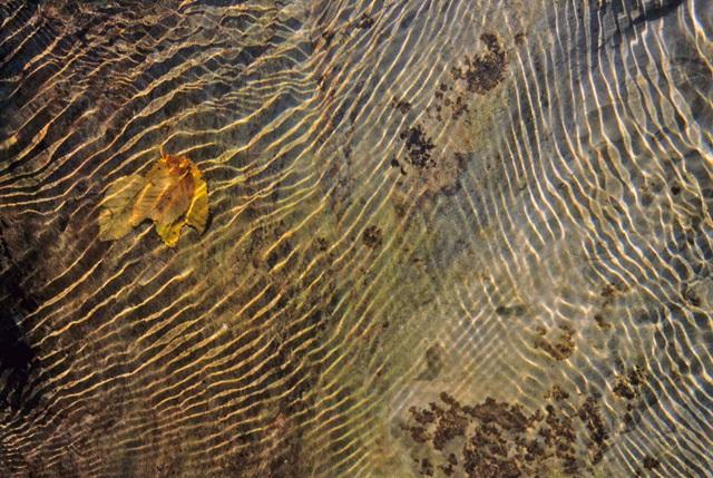 torrente purissimo all'orecchiella - foto di Vittorio Giannella