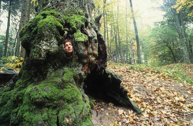 foreste casentinesi a camaldoli - foto di Vittorio Giannella